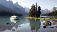 Jasper Alberta 5.5-Hour Jasper Wildlife and Waterfalls Tour with Maligne Lake Cruise from Jasper 5400P5