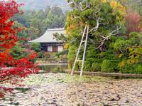 Private Kyoto Walking Tour of Japanese Zen Gardens Including the Golden Pavilion*