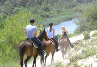 Mallorca Evening Tour: Horseback Riding, Dinner and Dance