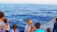 Sunrise Sailing Trip in Mallorca with Dolphin-Watching