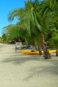 Roatan Shore Excursion: Small-Group West Bay Beach Tour