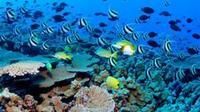 Sosua Glass Bottom Snorkel Tour from Puerto Plata