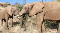 Lesedi Cultural Village Elephant Experience from Johannesburg