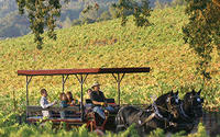 Wine Tasting Tour by Horse & Carriage