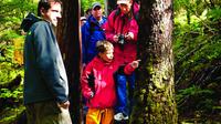 Ketchikan Rainforest Nature Walk and Sightseeing Cruise