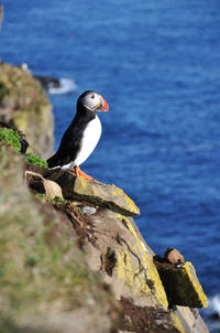 Reykjavik Shore Excursion: Puffin Sightseeing Cruise