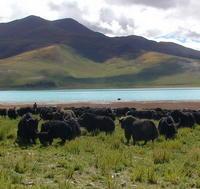 5-Day Private Tour: Lhasa, Gyangtse, and Shigatse