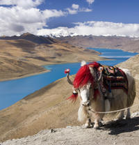 3-Day Best of Tibet Tour from Chengdu by Air: Lhasa, Yamdrok Lake and Khampa La Pass