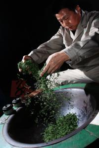 Experience Chengdu: Private Tea-Making Tour of Mengdingshan Tea Plantation