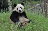Private Custom Chengdu Sightseeing Tour