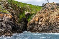 Hobart Sightseeing Cruise including Iron Pot Lighthouse