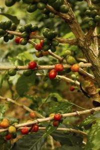 3-Day Tour of Eje Cafetero Coffee Region from Medellín