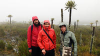Chingaza National Park Half Day Hiking Tour from Bogotá