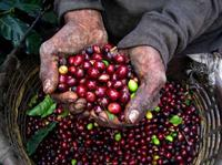 Colombian Coffee Tour from Bogota*