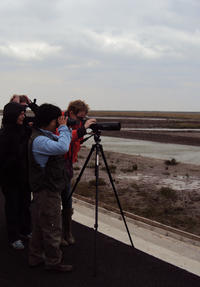 Private Tour: Birdwatching in Dongtan Wetland Park from Shanghai