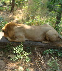 Half-Day Jungle Safari at The Kanheri Caves with Lunch