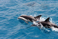 Clearwater Dolphin-Watching Tour