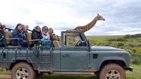 2-Day South African Wildlife Safari Guided Tour from Cape Town