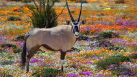 2-Day West Coast Highlights Guided Tour from Cape Town