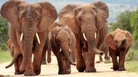 5-Day Garden Route Deluxe Adventure with Addo Safari Guided Tour from Cape Town