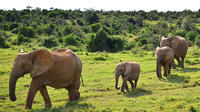 7-Day Garden Route Guided Tour with Winelands and Addo Safari from Cape Town