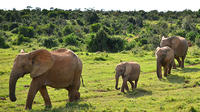 7-Day Garden Route with Winelands, Addo Safari from Cape Town