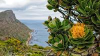 Cape Town Shore Excursion: Private Cape Peninsula and Boulders Beach Penguins Tour