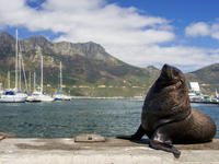 Full-Day Cape Peninsula and Hout Bay Tour from Cape Town
