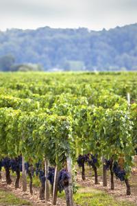 Stellenbosch Winelands Tasting Tour from Cape Town