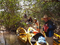 Marco Island Kayak Eco Tour