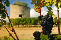 Bordeaux Super Saver: Gourmet Food Walking Tour with Lunch plus Medoc Wine Tasting*