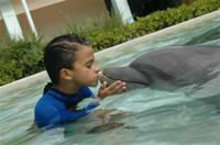 Dolphin Experience at the Miami Seaquarium