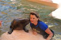 Swim with the Seals at the Miami Seaquarium