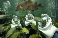 Underwater Helmet-Diving Experience at the Miami Seaquarium
