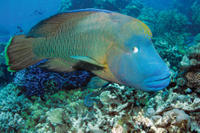 Outer Great Barrier Reef Snorkeling and Diving Cruise from Port Douglas