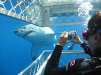 3-Day Eyre Peninsula Wildlife Adventure with Optional Shark Cage Dive from Adelaide