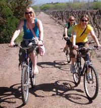 Bike Tour In Mendoza Wine Country