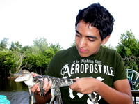Get Up Close With a Baby Alligator*