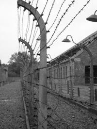 Auschwitz-Birkenau Small-Group Tour from Krakow