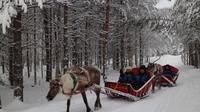 Visit a Reindeer Farm and Husky Farm by Snowmobile Sleigh