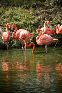 Day Trip to Celestun: Flamingos, Mangrove Boat Ride and Tampeten Petrified Forest