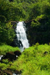 Small-Group Oahu Eco-Tour Including Waimea Valley Hike
