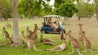 Small-Group Wildlife and Rain Forest Tour from Port Douglas