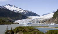 Juneau Shore Excursion: Mendenhall Glacier, Whale-Watching Cruise and City Tour