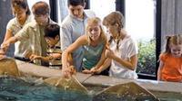 Houston City Tour and Admission to Downtown Aquarium