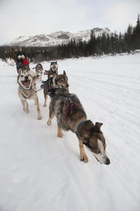 Northern Lights Overnight Tour with Dog Sledding