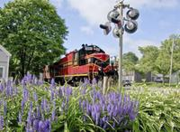Cape Cod Scenic Shoreline Train with Optional Lunch or Supper