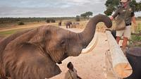 Elephant Experience at Camp Jabulani