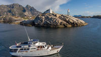 Whale Safari and Northern Light Cruise by Yacht from Tromsø