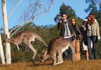 Sydney Shore Excursion: Small-Group Blue Mountains Day Trip